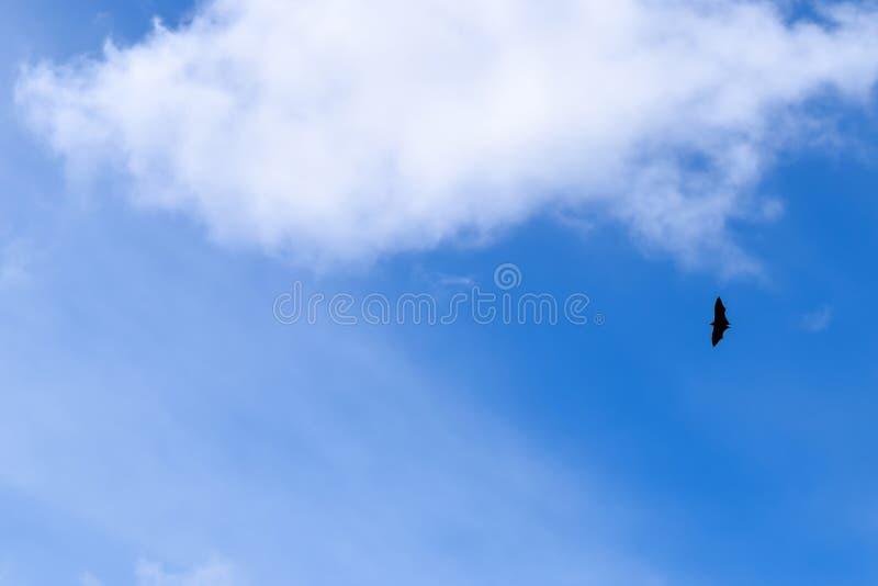Schläger-Fliegen im klaren Himmel stockfotografie