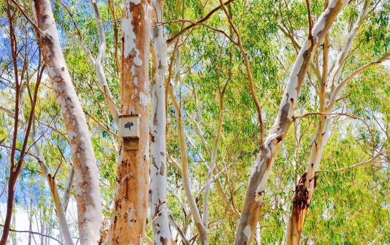 Schläger-Kasten in australischen Bush stockbild