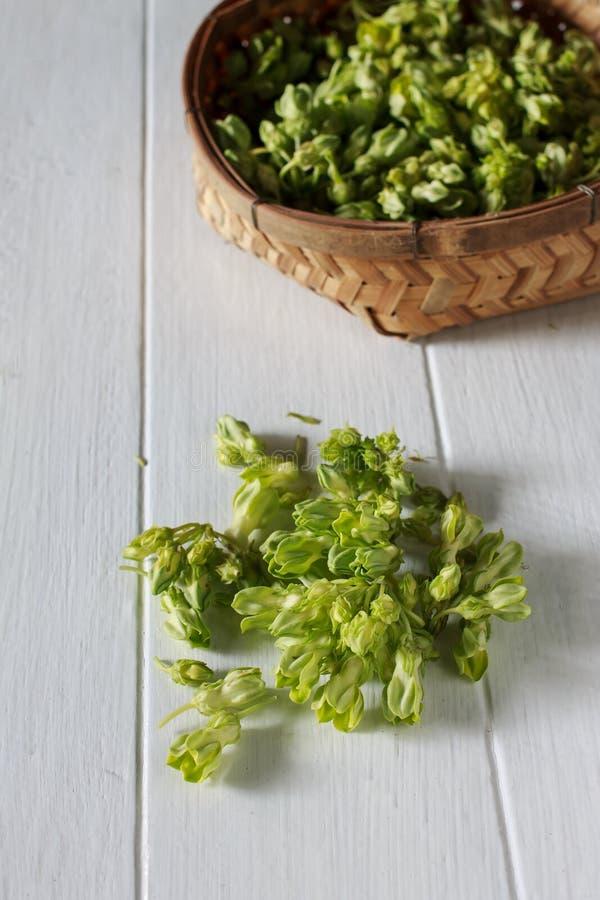 Schlüsselblume-Kriechpflanze stockfotos