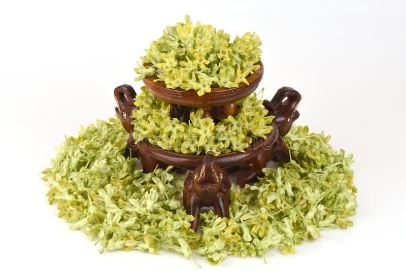Schlüsselblume-Kriechpflanze (Telosma geringes Craib) aromatisch stockfotografie