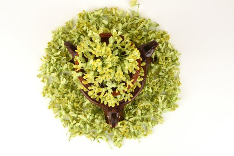 Schlüsselblume-Kriechpflanze (Telosma geringes Craib) aromatisch lizenzfreie stockfotos