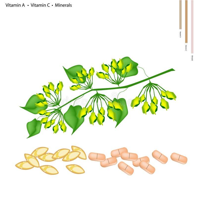 Schlüsselblume-Kriechpflanzen-Blume mit Vitamin A und C vektor abbildung