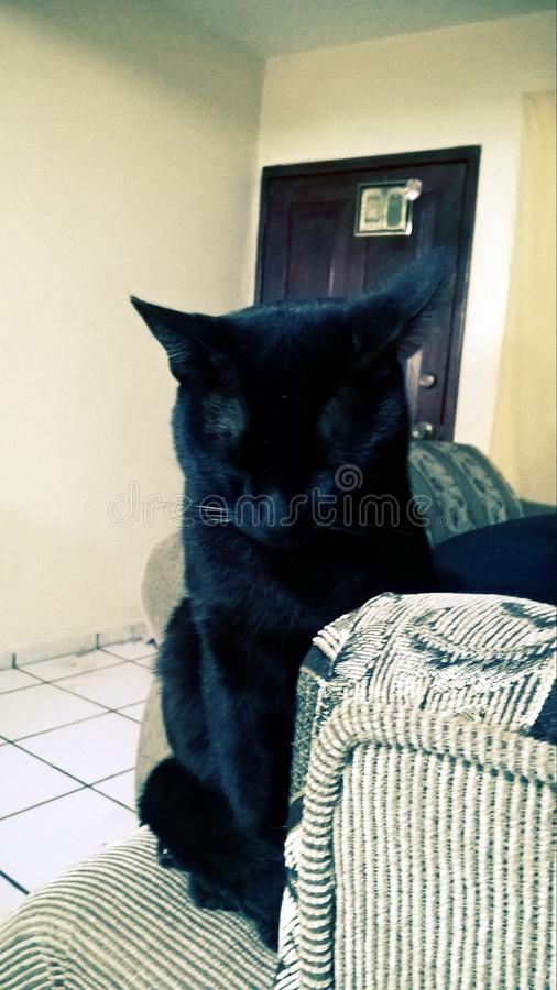 Schlaf der schwarzen Katze lizenzfreies stockbild
