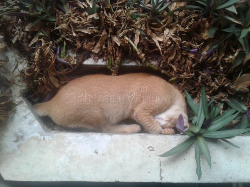 Schlaf meine Katze lizenzfreie stockbilder