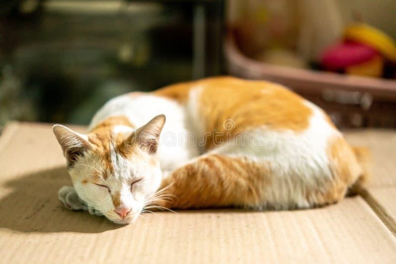 Schlafen braune und weiße thailändische Katze auf Papppapier mit unscharfem Hintergrund stockbilder