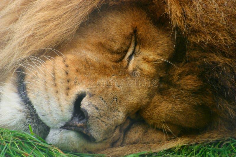 Schlafender Riese stockfotografie
