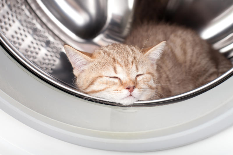 Schlafenkätzchen innerhalb der Wäschereischeibe stockbilder