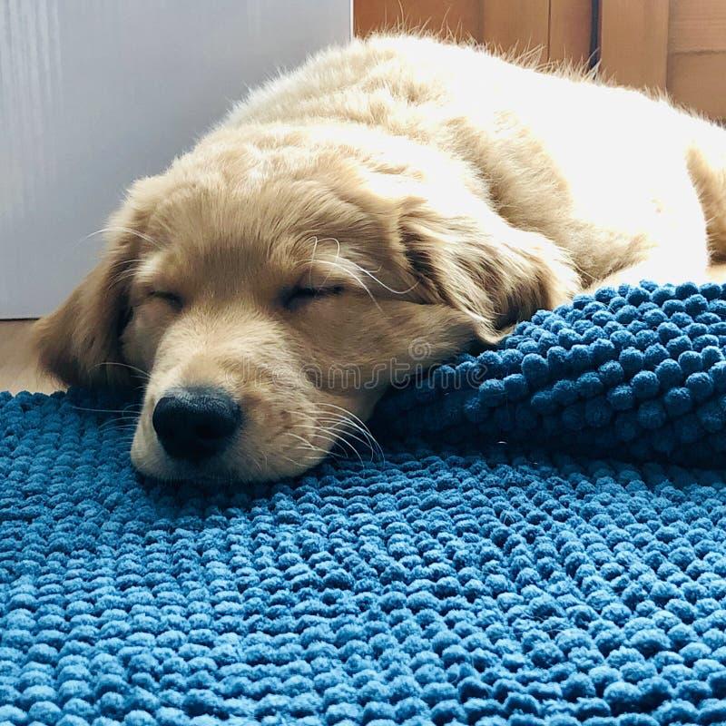 Schlafennebel stockbilder