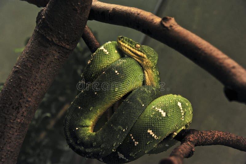 Schlange stockfoto
