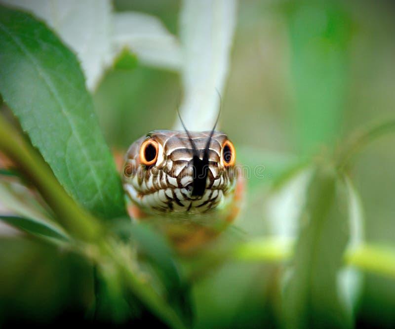 Schlange in den Büschen stockfotografie