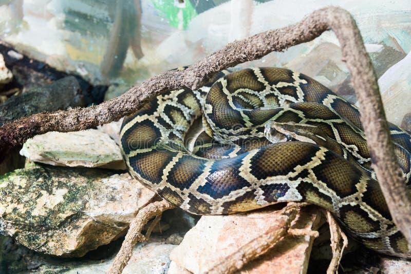 Schlange in Haifa Zoo lizenzfreie stockfotos
