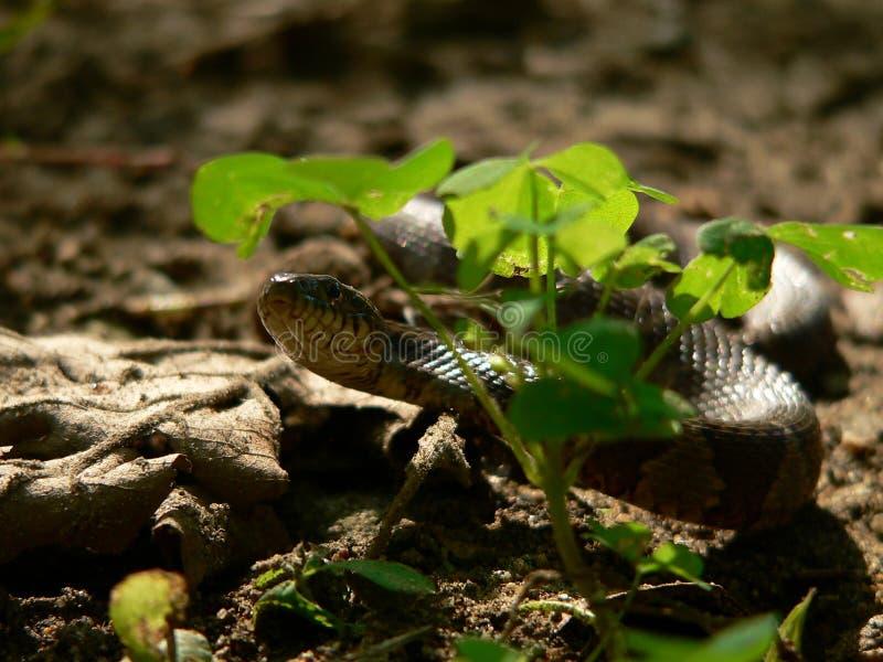 Schlange im Gras stockbild