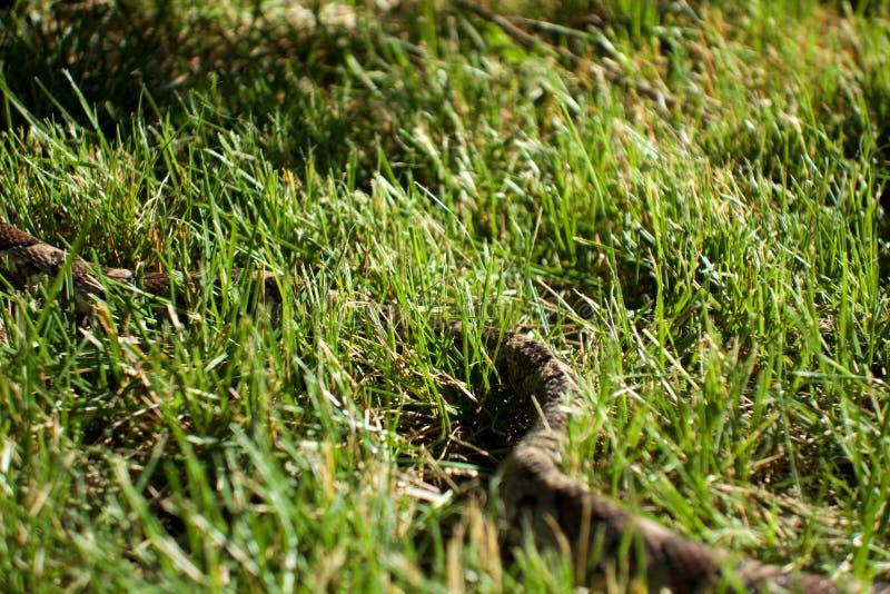 Schlange im Gras lizenzfreie stockfotos