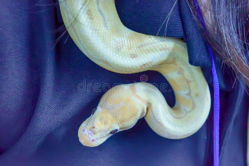 Schlange ist Haustier lizenzfreie stockfotografie