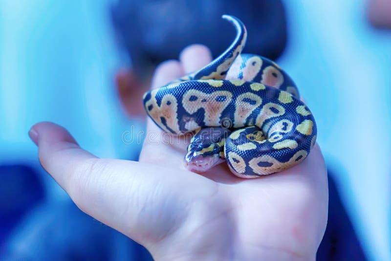 Schlange ist Haustier stockbild