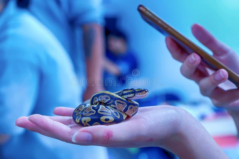 Schlange ist Haustier stockbilder