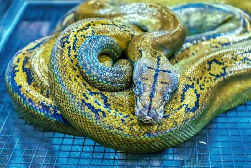 Schlange ist Haustier lizenzfreie stockbilder