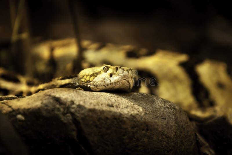 Schlange am NC-Zoo stockbilder