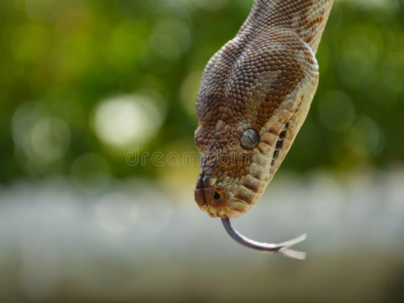 Schlange sagen Sie hallo stockfotografie