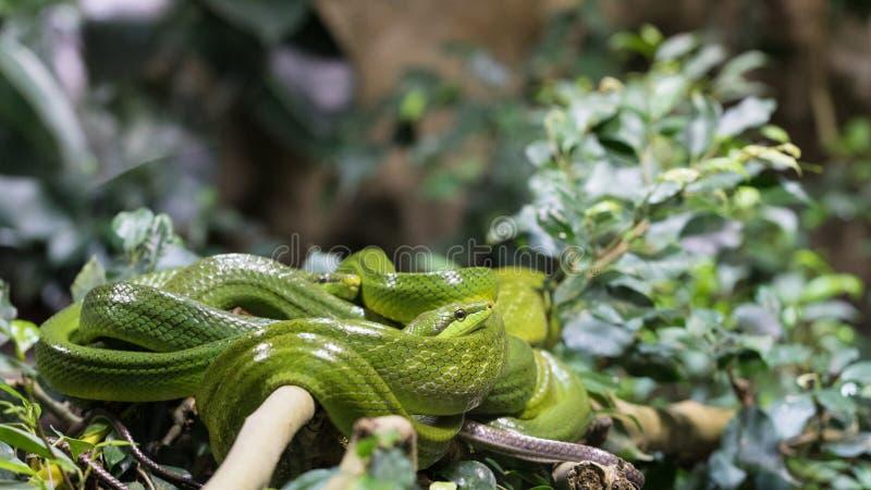 Schlangen, die nicht auf einer Fläche sind lizenzfreies stockbild