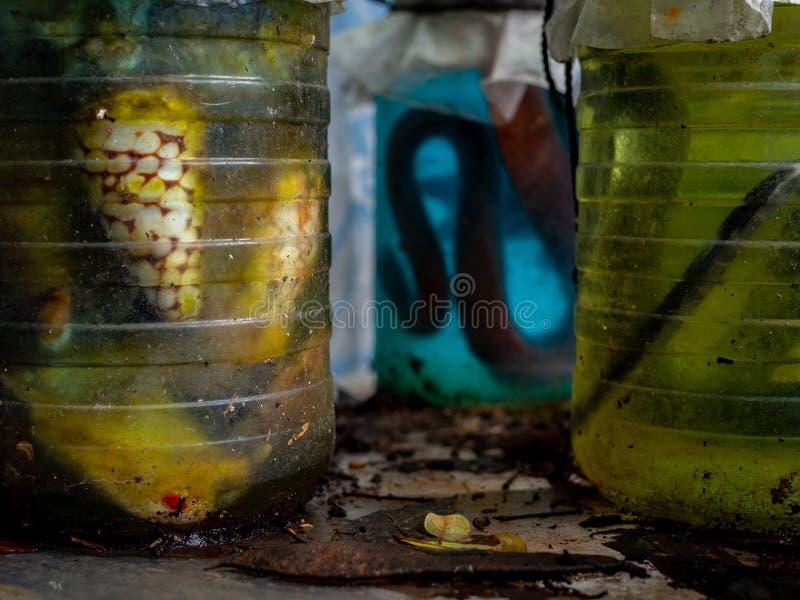 Schlangen konserviert in der Flasche stockbild