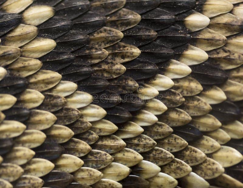 Schlangenhaut