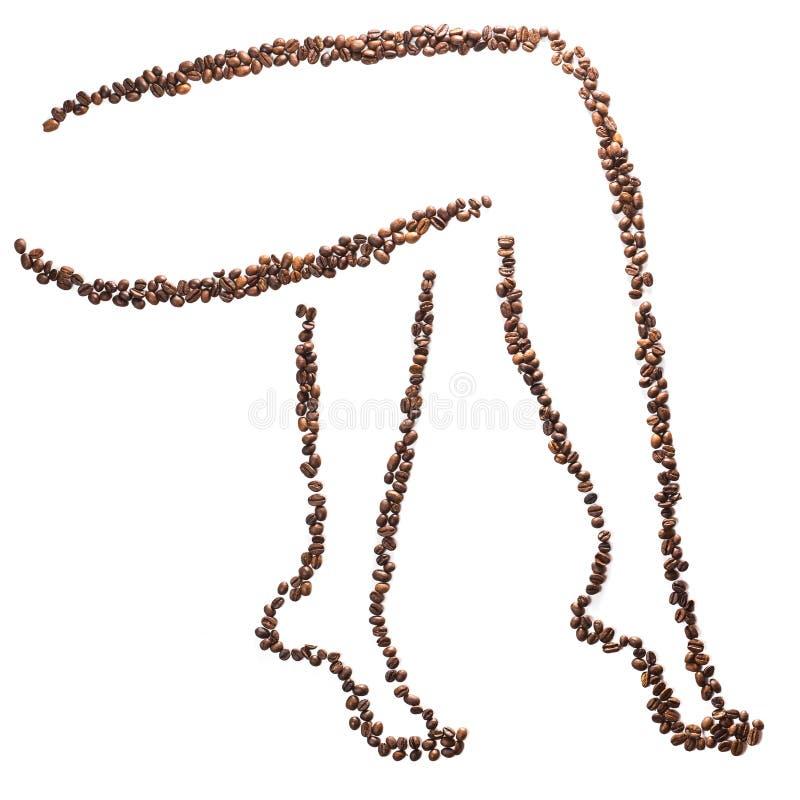 Schlankes Frauenbeinschattenbild von den Kaffeebohnen lokalisiert auf weißem Hintergrund Konzeptgewichtsverlust und schöne Zahl stockbilder