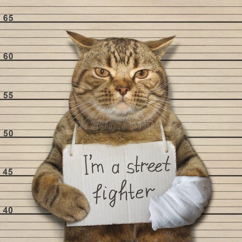 Schlechte Katze ist ein Straßenkämpfer lizenzfreie stockfotos