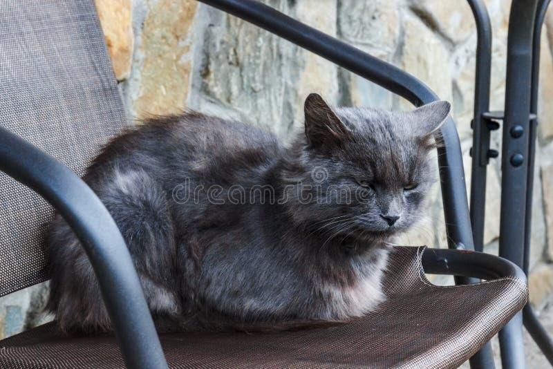 Schlechte und traurige deprimierende obdachlose graue Katze stockfotografie