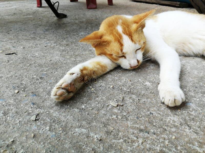 Schlechter obdachloser Katzenschlaf auf schmutzigem Boden stockfoto
