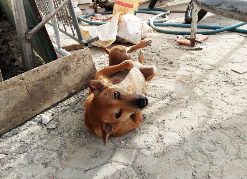 Schlechtes braunes Hundelegen lizenzfreie stockfotografie
