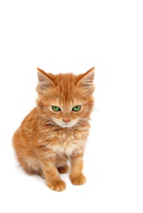 Schlechtes Ingwer-Kätzchen stockbild