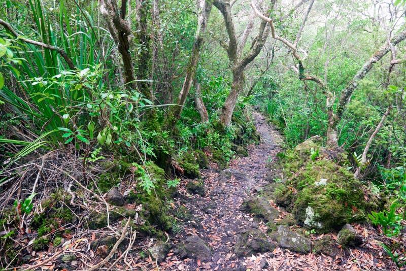 Schleppen Sie über verfestigter Lava auf in Rangitoto Neuseeland lizenzfreie stockfotografie