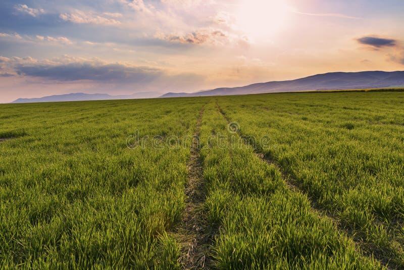 Schleppen Sie zum Horizont auf dem grünen Feld auf einem Sonnenuntergang lizenzfreie stockbilder