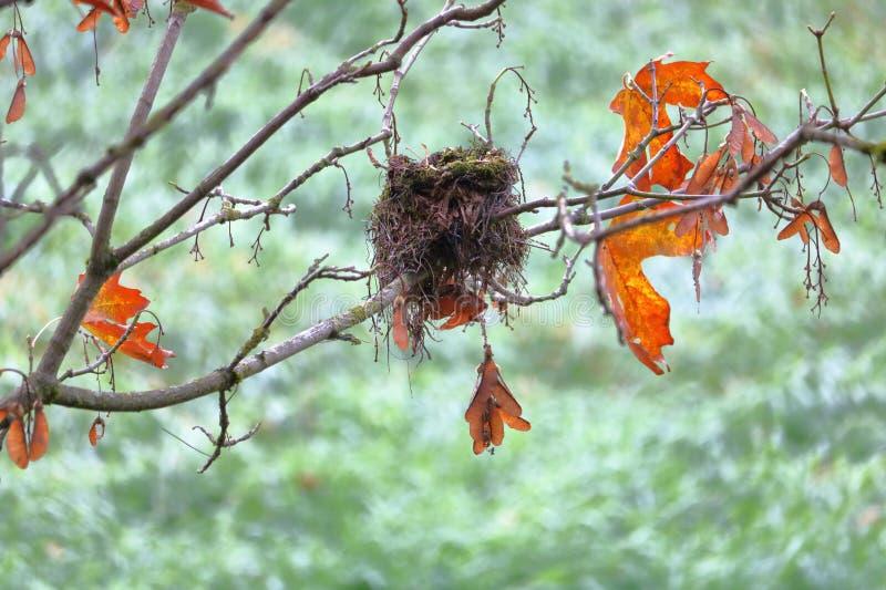 Schließen Sie auf einem kleinen Vogel ` s Nest lizenzfreie stockbilder