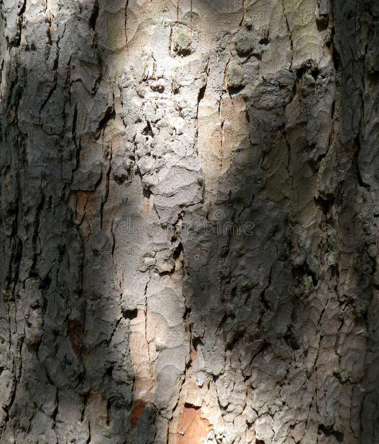 Schließen Sie herauf alte Baumrinde im gescheckten Sonnenlicht lizenzfreies stockfoto