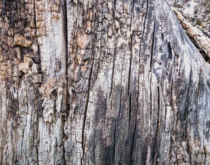 Schließen Sie herauf alte hölzerne Beschaffenheit Gebrochener toter alter Baumstammhintergrund lizenzfreie stockfotos