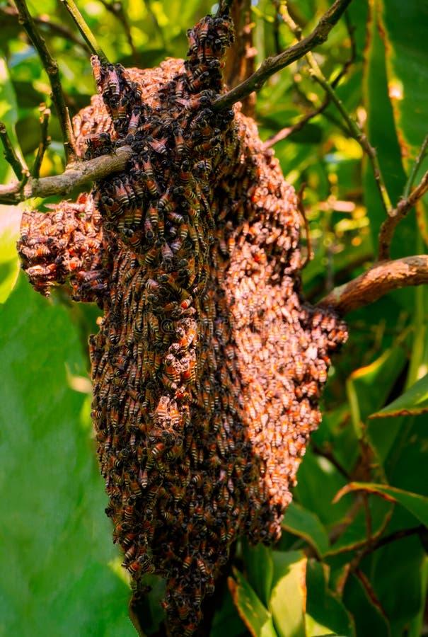 Schließen Sie herauf Ansicht der Arbeits-bes auf Honigzellen stockbild