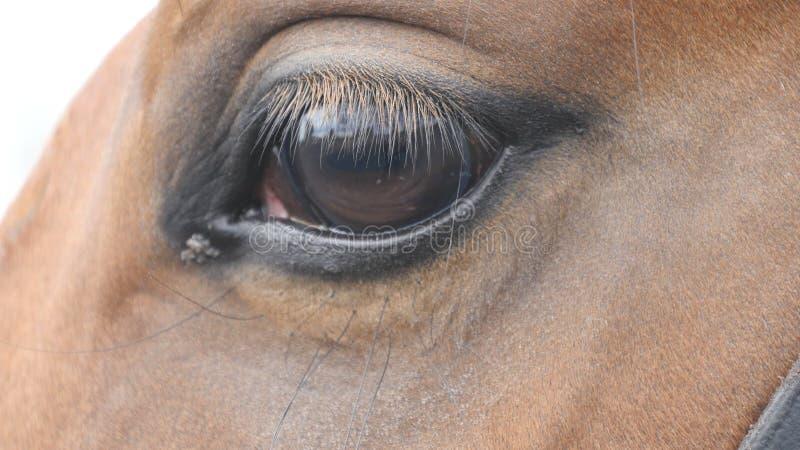 Schließen Sie herauf Ansicht des Auges eines schönen braunen Pferds Pferdeartiges Augenblinken lizenzfreies stockfoto