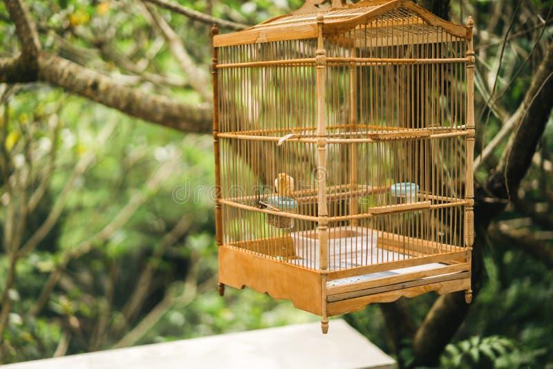 schließen Sie herauf Ansicht des kleinen Vogels im hölzernen Käfig, der hängend stockbild