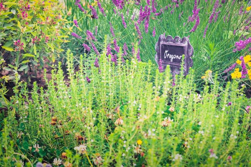 Schließen Sie herauf Ansicht von Gartenpflanzen und von Kräutern lizenzfreies stockfoto