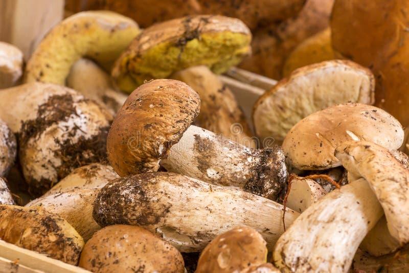 Schließen Sie herauf Bündel Porcini-Pilze am Markt stockbilder