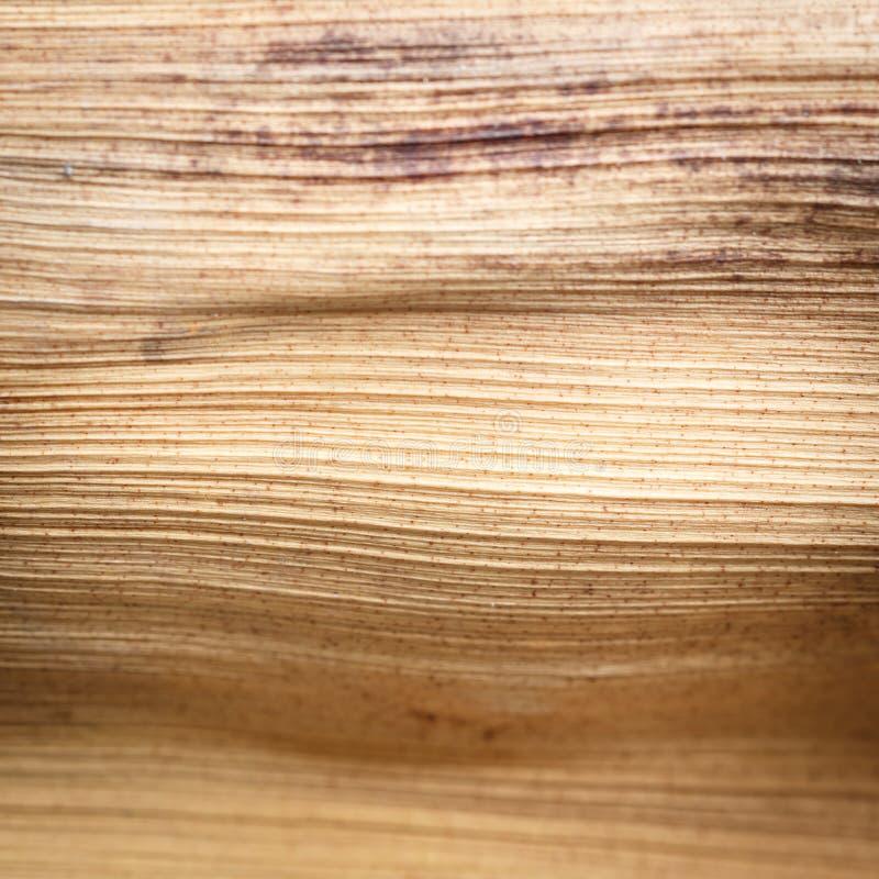 Schließen Sie herauf Beschaffenheit des getrockneten Palmblattes stockbilder