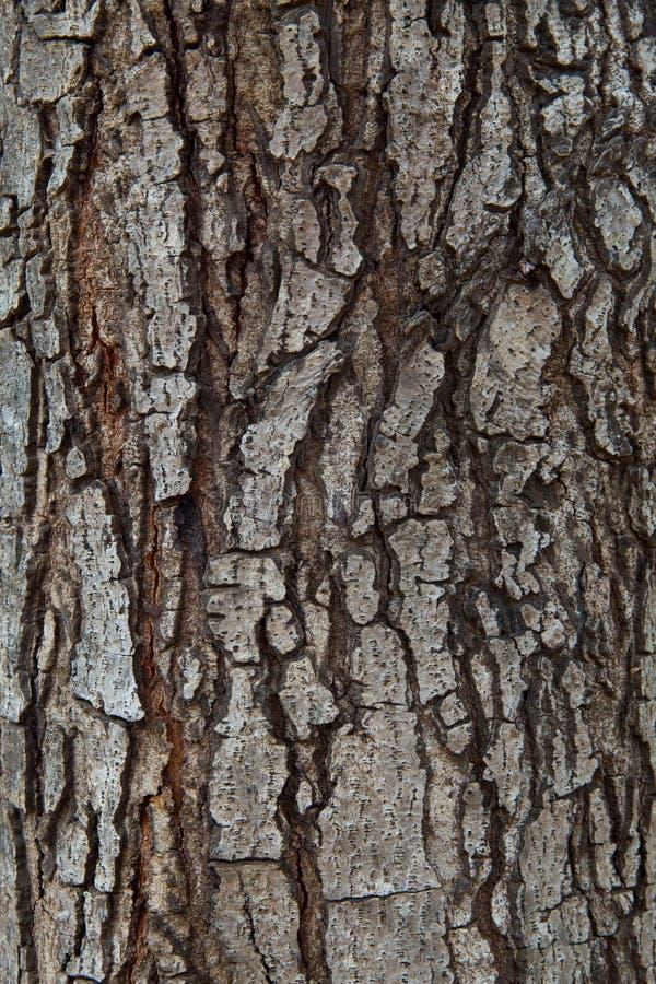 Schließen Sie herauf Beschaffenheit des hölzernen Gebrauches der Kiefernbarke als natürliches Planke backgrou stockfotografie
