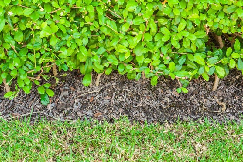 Schließen Sie herauf Busch und bedecken Sie Beschaffenheit, Hintergrund mit Gras stockfotografie