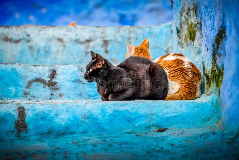 Schließen Sie herauf das Porträt von zwei Kalikokatzen und draußen auf der blauen Treppe des Hauses sitzen, wenn eine Katze seitl stockfoto
