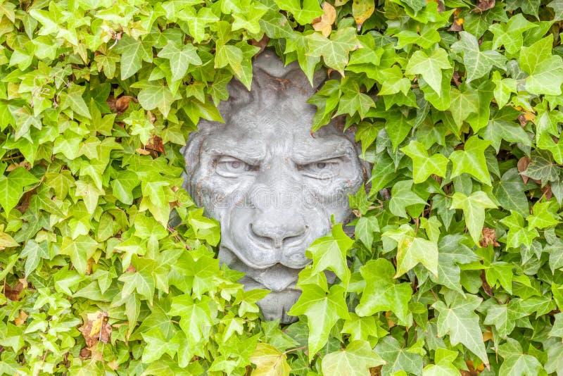 Schließen Sie herauf die Löwegesichtsstatue, die auf Außenwand des grünen Efeus versteckt wird stockfotos