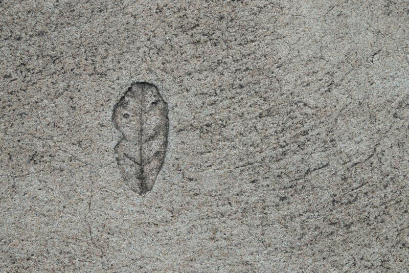 Schließen Sie herauf Draufsicht, die das einzelne Blatt, das auf Beton für gestempelt wird, Gehwege verzieren stockfotografie