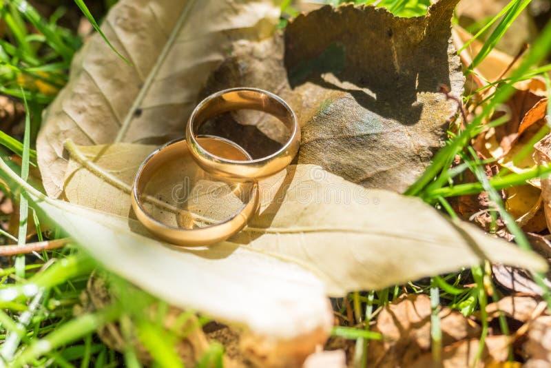 Schließen Sie herauf Eheringe lizenzfreies stockfoto