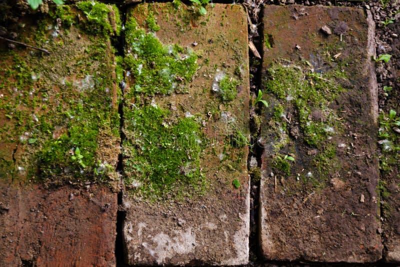 Schließen Sie herauf einen alten Außenhintergrund des roten Backsteins mit dem grünem Moos, Gras oder Vegetation, die zwischen de lizenzfreie stockfotos